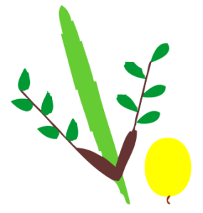 lulav and etrog illustrator
