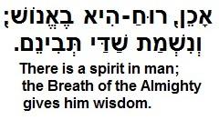 Almighty wisdom Job 32-8
